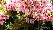 Пролетта е тук.. авторски клип