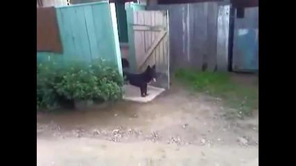 Как куче охранява обекта