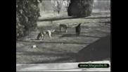 Смешни Животни - Мега Колекция