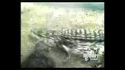 Animal Face - Off - Bear Vs Cayman