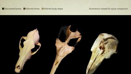 Доказателства в подкрепа на еволюцията