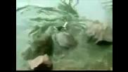 Kaplumbaga Guvercini Yedi izle 2011 Hq