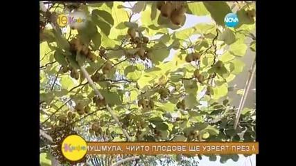 Съвети от д-р Гайдурков - На кафе (17.07.2014)