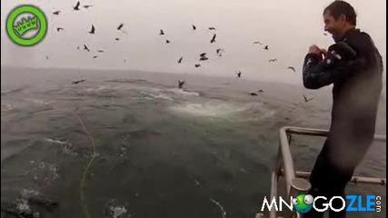 Китове за малко да си хапнат водолази