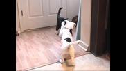Кеч Мания - Котка vs кученце