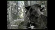 Животински воини - Маркирай територията (нецяла)