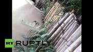 Котка хвърлена жива на крокодилите в Перу