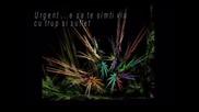 URGENT - SECRET GARDEN (Nocturne)