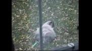 Компилация от инциденти с котки и смешни котки