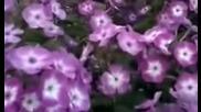 Пролетен валс на цветята!