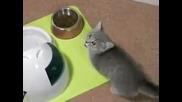 Сладко коте моли за храна