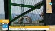 Туристи притесняват лешоядите в Родопите