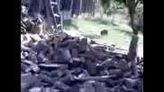 Лудо цепене на дърва :d