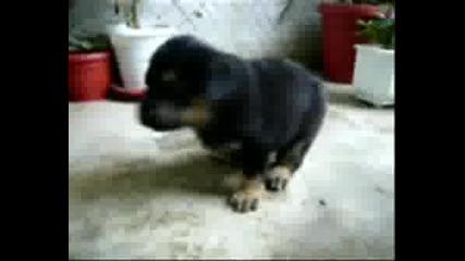 Сладки Пухкави Кученца, Като Меченца Са :)