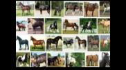 Конят в човешката история ( аудио-пътешествие )
