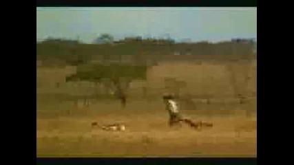 Smqh - 4ovek nadminava Gepard