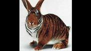Много Смешни Картинки Part7 (животни)