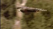 Животът на Морските игуани на Галапагоските острови.