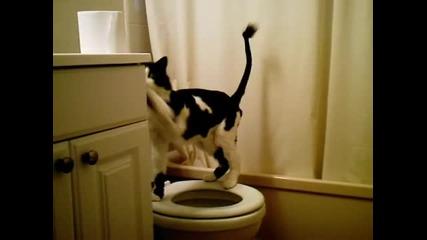 Умната котка!