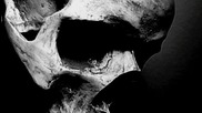 Amoss - Cranium