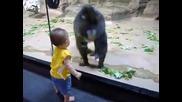 Маймуна се дупи на бебенце