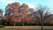 Един прекрасен парк