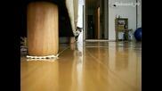 Лудото коте напада камерата