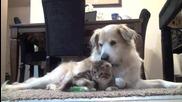 Пияно коте и мързеливо куче са най-добрата комбинация!