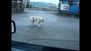 Лудо куче влиза в ритъм