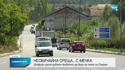 ЗАБАВНИ КАДРИ: Мечка спринтира по главния път Асеновград – Смолян