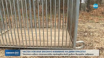 СЛЕД СИГНАЛ НА NOVA: БАБХ проверяват случая с превозването на диви прасета