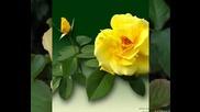 Chris De Burgh - rose Of England