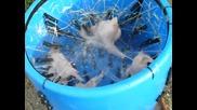 Как да се скубят пилета - технология