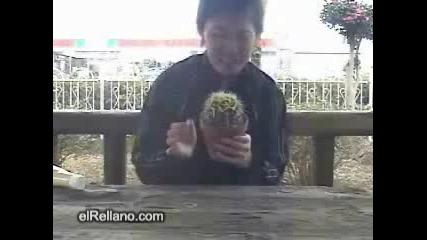 Ludak Qde Kaktus