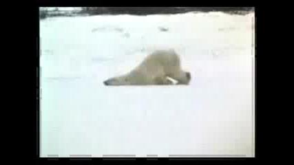 Yay! Funny Animal Videos