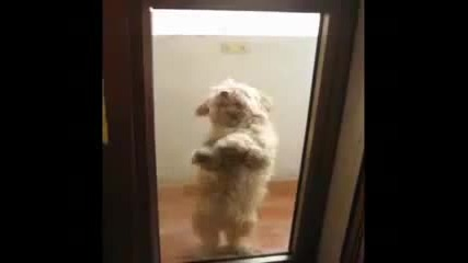 Dog Dancing Hispanicly
