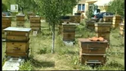 Био Пчеларство - Бразди