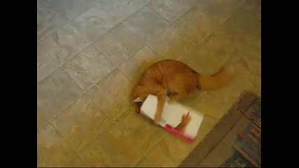 Коте мрази музикални картички
