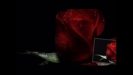 Честит Свети Валентин, Дианита!