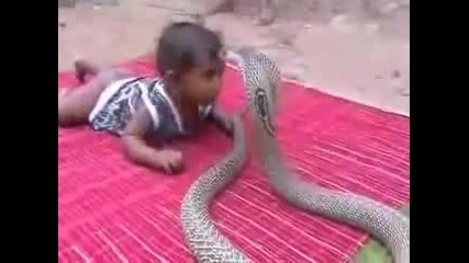Бебе срещу кобра!