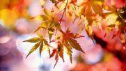 Есенни листа, автор Йосиф Леви