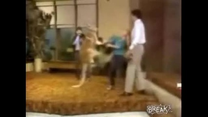 Кенгуру удря жена - Смях