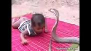 16+ Потресаващи кадри - бебе си играе с кобра