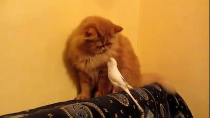 Папагал чете конско на котка - Смях
