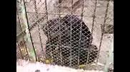 Зоопарк - Стара Загора