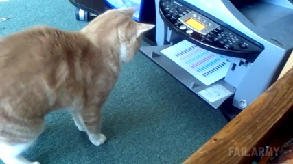 Котки правят неочаквано пакости || Failarmy
