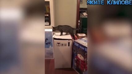 Котешки гафове