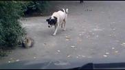 Куче дебне като котка(смях)