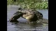 Риба Изяжда Малко Крокодилче