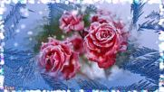 Татьяны Козловской - Ледяные Розы!
